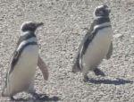 Los-Pinguinos