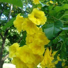 Auroville-2 (4)