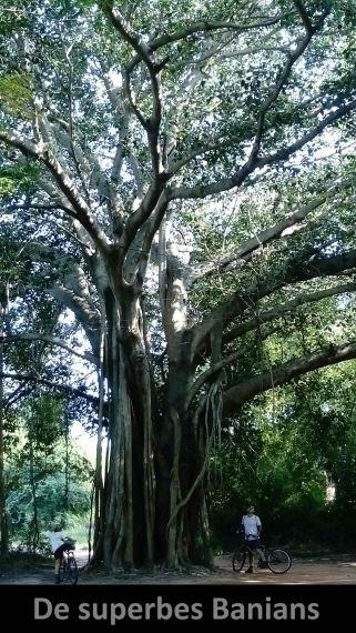 Auroville-6 (5)